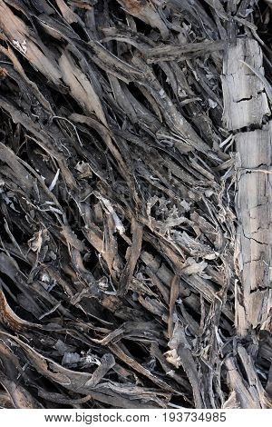 palm leaf cinder in an extinct fire