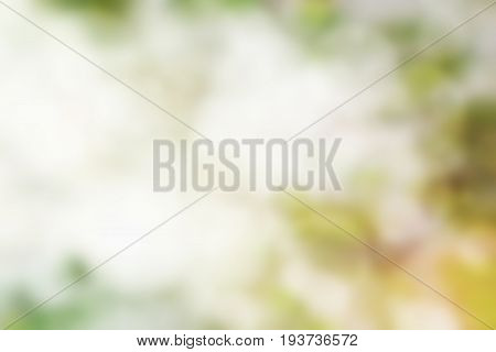 Blurred canopy, abstract image for use as background.
