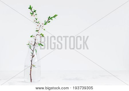 Flowers composition. Apple tree flowers in vase. Front view copy space