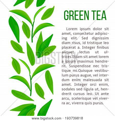 Fresh Green tea leaves and twig. vertical stripe and description text. for cosmetics, drinks, beverage, label, decoration, banner, advertising, prints, poster, label, wrapping, postcard, invitation