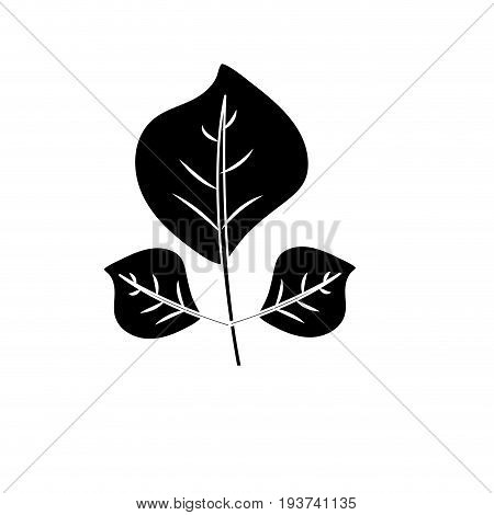 contour natural leaves botany of tropical plant vector illustration