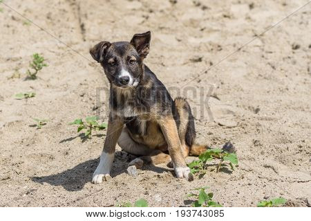 Portrait of adorable stray mixed-breed puppy having rest in a sandy place