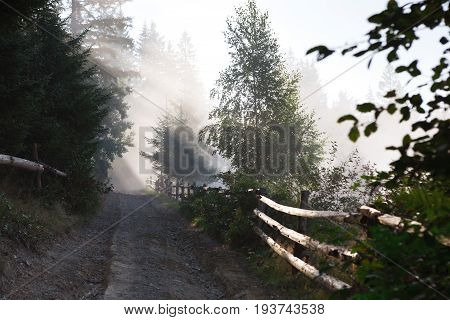 Fenced forest road in morning sunlight. Sun rays on green pinetrees, landscape background