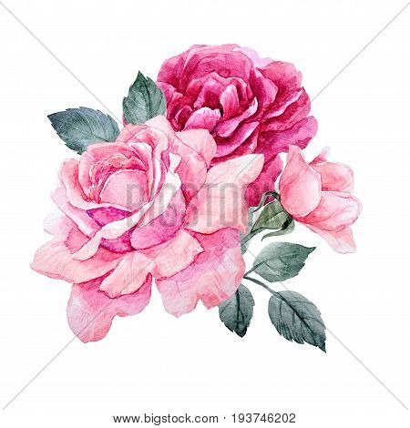 Beautiful composition with hand drawn watercolor roses
