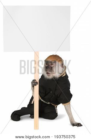 Monkey animal mammal ape primate isolated holding sign
