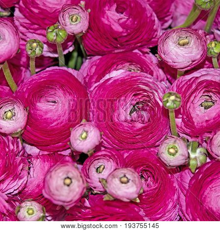 a pink floral background - close up