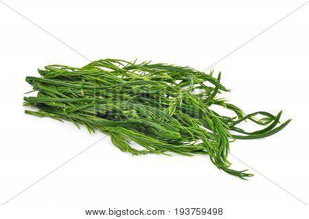 green leaves senegalia pennata or or cha om isolated on white background
