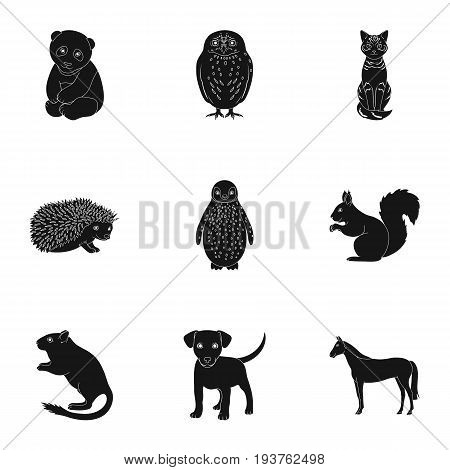 Deer, tiger, cow, cat, rooster, owl and other animal species.Animals set collection icons in black style vector symbol stock illustration .