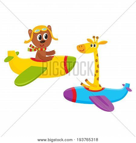 Cute funny animal pilot characters flying on airplane - bear and giraffe, cartoon vector illustration isolated on white background. Little baby bear and giraffe characters flying on airplane