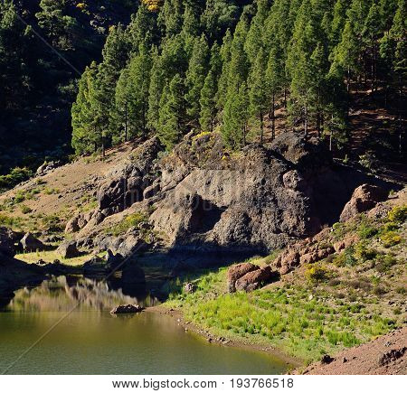 Mountain landscape, water dam and pine trees, Gran canaria, Canary islands
