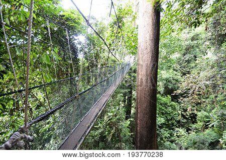 Poring Treetop Canopy Walk at Ranau Malaysia