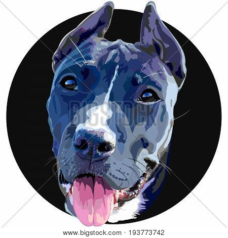 Dog breed Staffordshire terrier puppy with his tongue hanging out. Dog head vector graphics. Dog vector illustration can be used for t-shirt and bag.