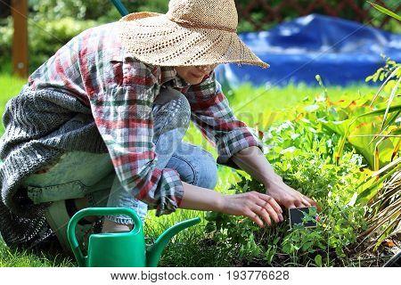 Plant care in the garden. Woman plants plants in backyard garden.