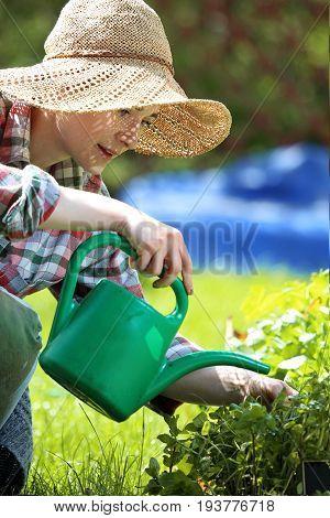 Watering plants on the beds. Woman plants plants in backyard garden.