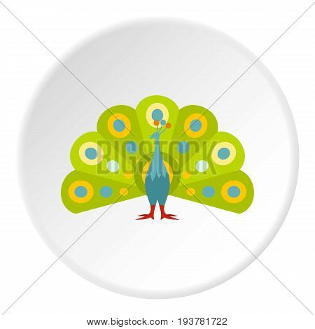 Colorful peacock icon in flat circle isolated vector illustration for web