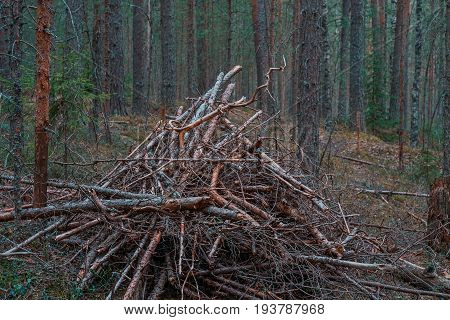 Huge pile of dry brushwood on the ground in dark pine forest in dusk.