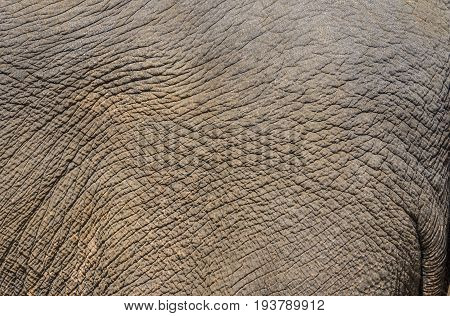 an elefant skin - close up texture