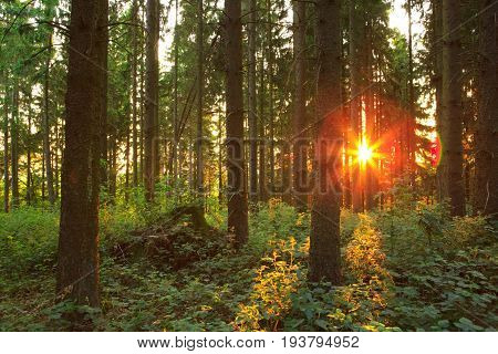 Forest Road Under Sunset Sunbeams. Green German forest at sunset.