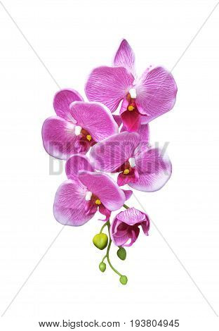 Pink artificial orchid flower isolated on white background