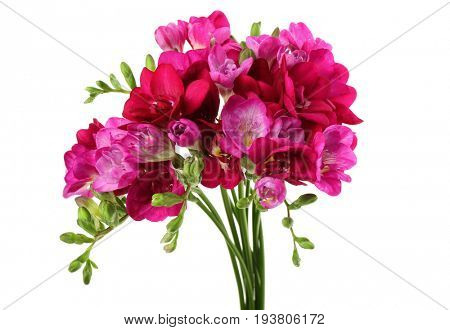 Bunch of beautiful blooming freesia on white background