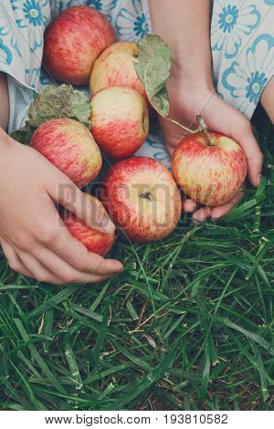 Girl holds apples sit on grass. Gather harvest at farm, agricultural concept