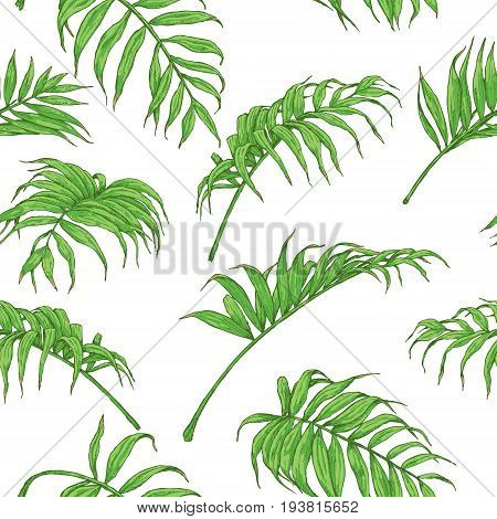 Hand drawn branches and leaves of tropical plants. Seamless pattern made with green palm fronds isolated on white.
