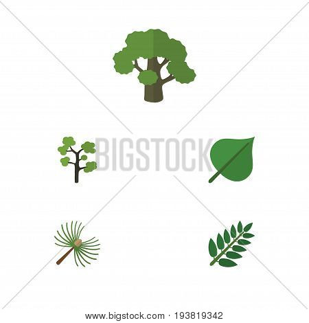 Flat Icon Nature Set Of Acacia Leaf, Garden, Rosemary And Other Vector Objects. Also Includes Oak, Rosemary, Tree Elements.
