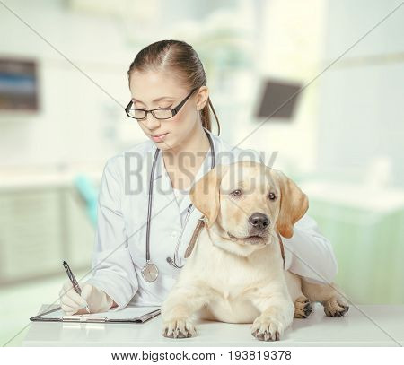 Female dog doctor patient medical staff healthy life hospital staff