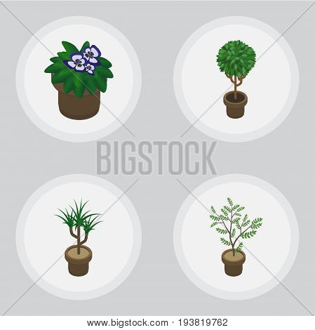 Isometric Flower Set Of Fern, Tree, Houseplant And Other Vector Objects. Also Includes Flowerpot, Houseplant, Botany Elements.