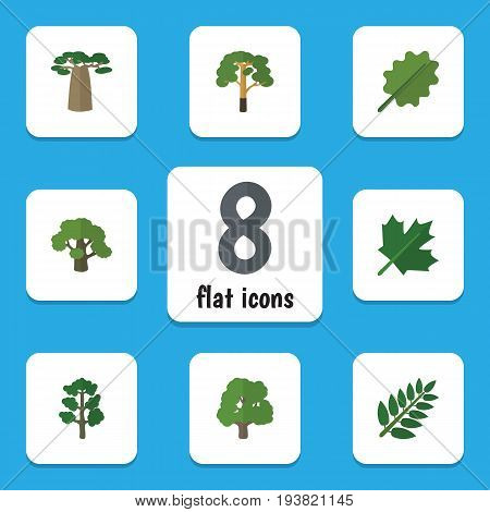 Flat Icon Ecology Set Of Decoration Tree, Acacia Leaf, Forest And Other Vector Objects. Also Includes Tree, Maple, Baobab Elements.