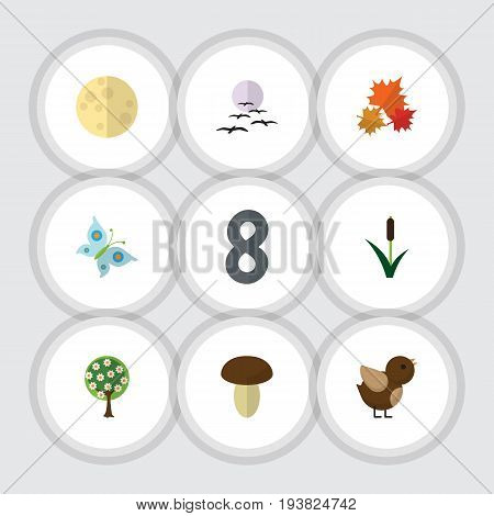 Flat Icon Bio Set Of Monarch, Cattail, Tree And Other Vector Objects. Also Includes Cattail, Mushroom, Gull Elements.