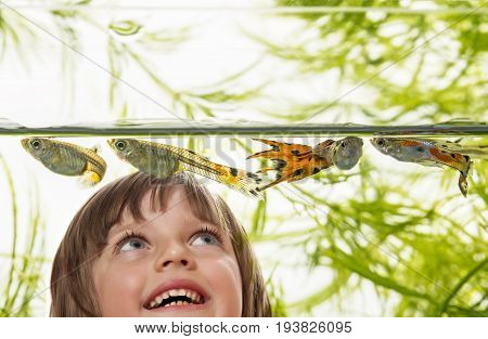 little girl looking at Guppy Barbados Millions Million fish - (Poecilia reticulata)