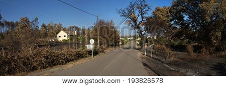 Road with burnt signs goes through burnt trees and crops caused by forest fires near houses at Lameira Cimeira and Mo Pequena villages. Pedrogao Grande Portugal.