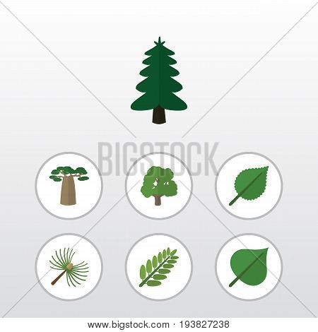 Flat Icon Natural Set Of Baobab, Leaves, Rosemary And Other Vector Objects. Also Includes Spruce, Hickory, Park Elements.