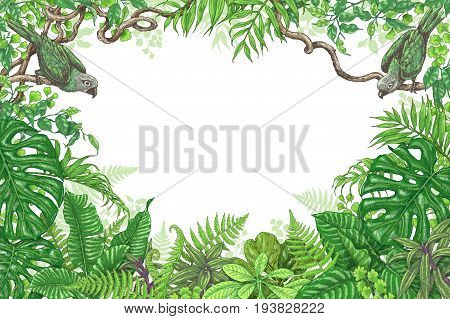 Hand drawn branches and leaves of tropical plants. Vivid rectangle horizontal floral frame with birds sitting on liana branches. Vector sketch. Space for text.
