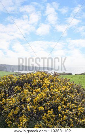 beautiful green fields of county kerry ireland