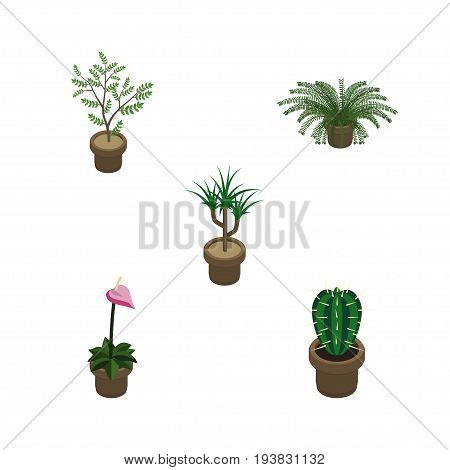 Isometric Houseplant Set Of Houseplant, Plant, Peyote And Other Vector Objects. Also Includes Plant, Cactus, Flower Elements.