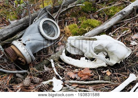 Skull of a wolf and an old gas mask. Protecting animals from the dangers created by man in a grotesque interpretation