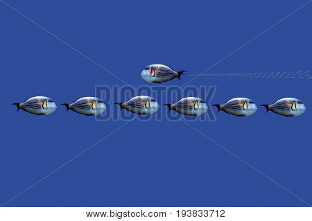 3D Illustration of tropical fishes on concept : don