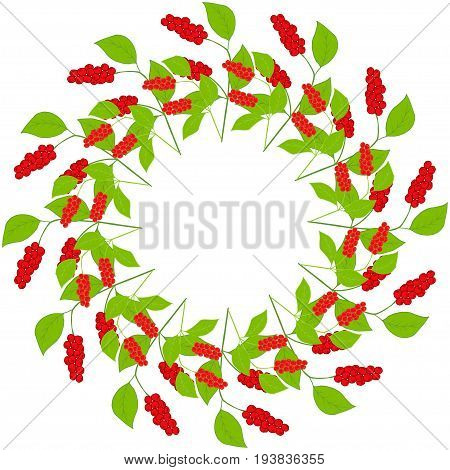 Branch, berries of Chinese Schisandra, in color, isolated. One of the best adaptogen herbs for stress relief. Round arrangement frame, mandala, for design of scarf, textiles, wallpaper, decoupage.