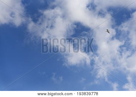 Summer Cloudy Sky Over The Black Sea, Seagull Flying, Natural Background