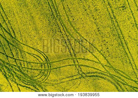 Field sown with agricultural crops and photographed from above