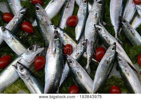 Fresh Mackerel (Scomber scrombrus) for sale at market.