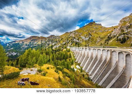 Mountain Lake Lago di Fedaia, Dolomites. Powerful dam blocked the lake. Sore cows grazing in a meadow. The concept of ecological and extreme tourism