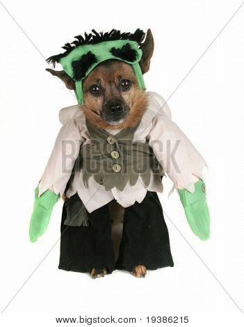 a dog dressed up as Frankenstein
