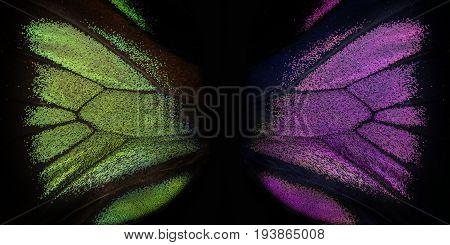 Trogonoptera brookiana - Rajah Brooke Birdwings- tropical buttelfly - detail