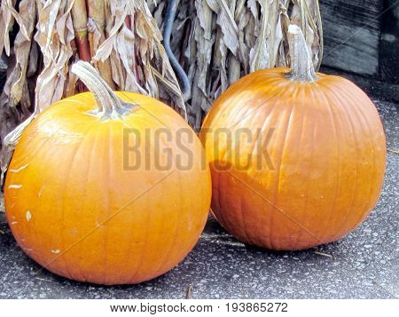 Two large pumpkins on bazaar in St. Jacobs Village Ontario Canada