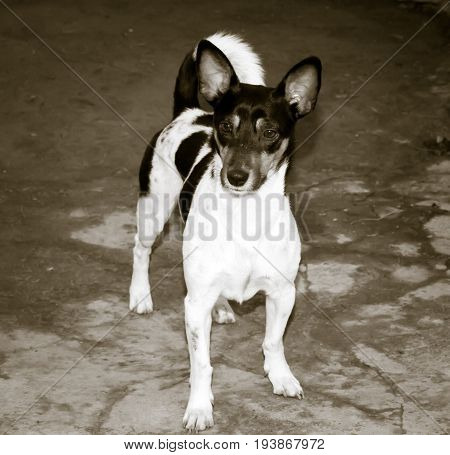 black and white photo of a dog portrait