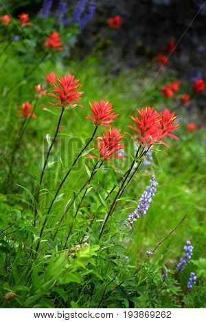 Wildflowers in Mountains Wilderness color