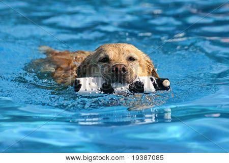 dog at a pool poster